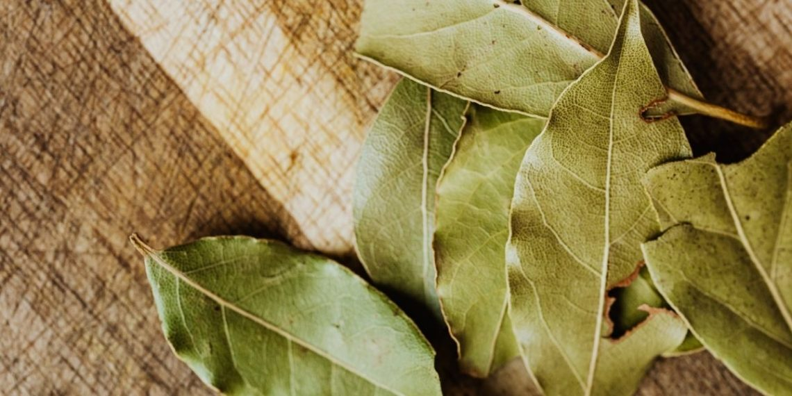 Conoce algunos beneficios de tomar té de hojas de laurel