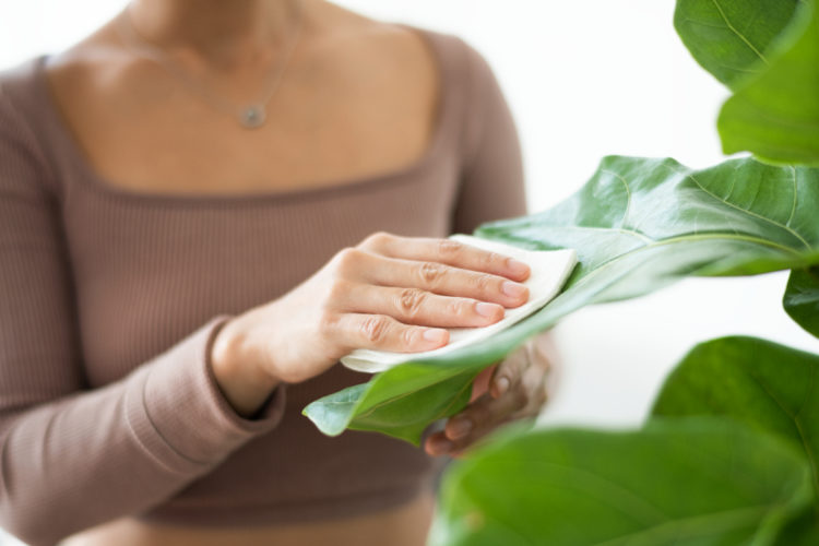 Conserva las hojas con soluciones caseras libres de químicos