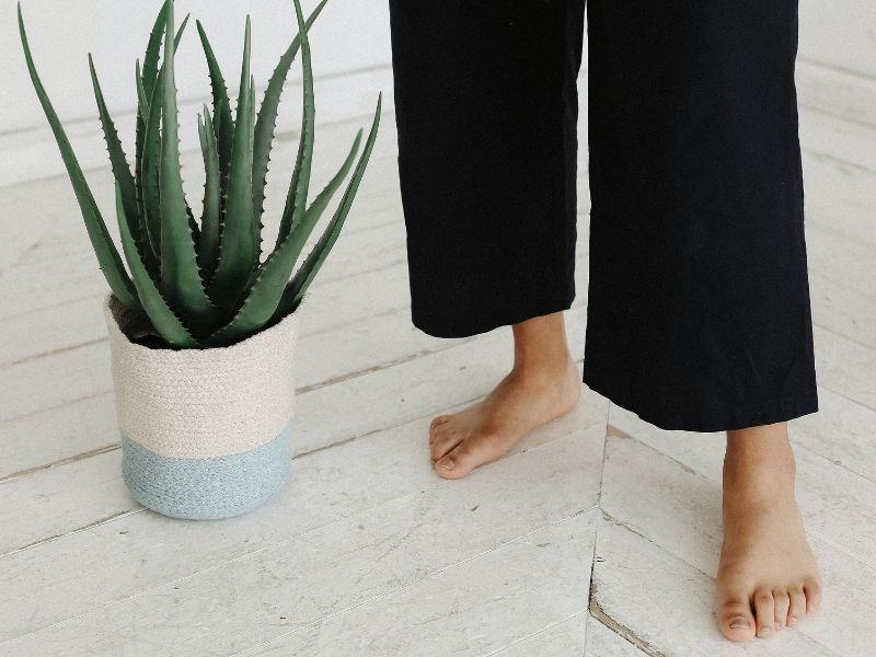 ¿Cómo decorar el baño con plantas?